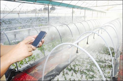 农业物联网玩转智慧浪潮 新生力量不容小觑
